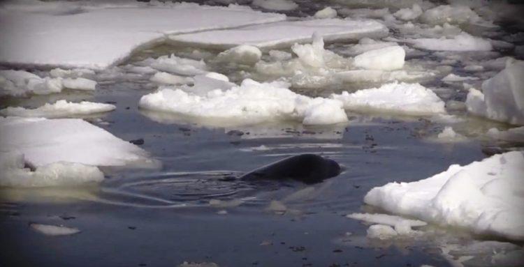 orcas 19