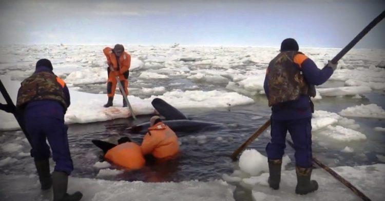 orcas 22