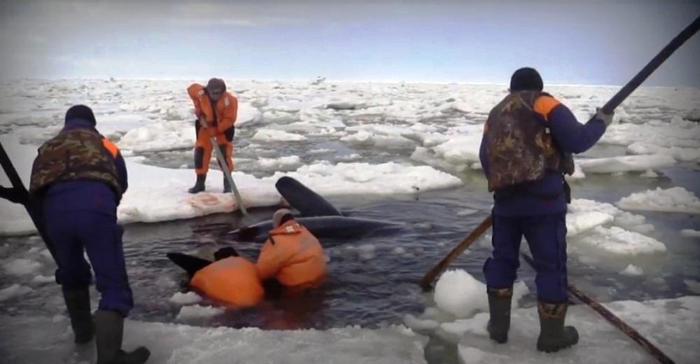 orcas 22 portada