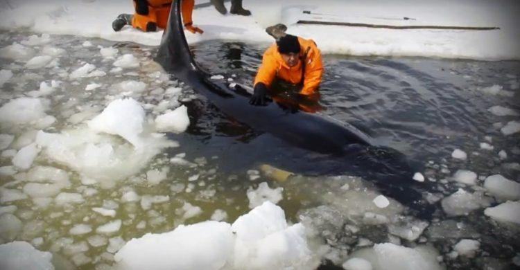 orcas 30
