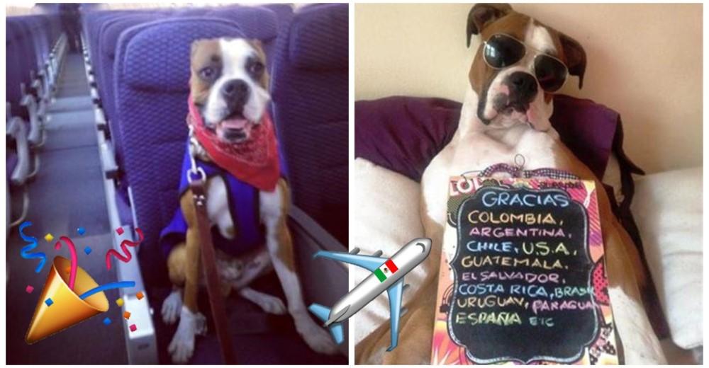 oscar-perro-viajo-a-mexico1 - Copy