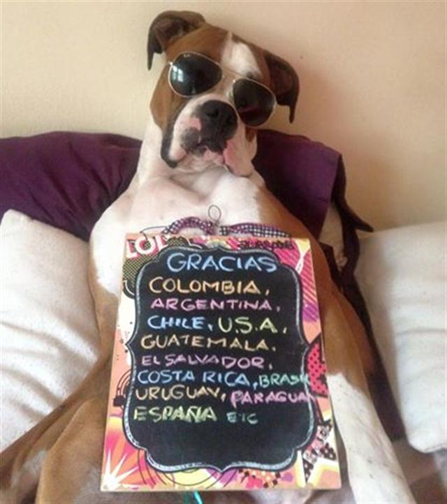 oscar-perro-viajo-a-mexico1