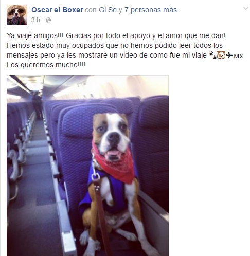 oscar-perro-viajo-a-mexico3