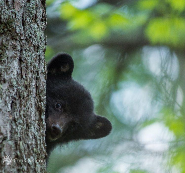oso bebe huerfano 1