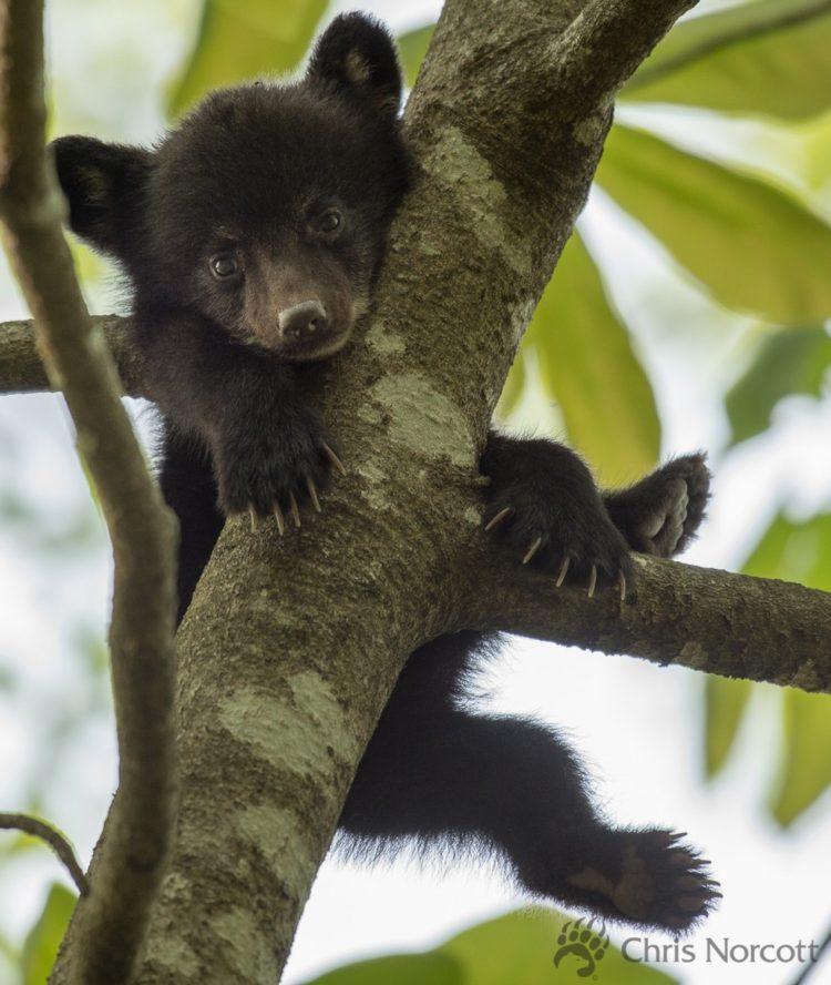 oso bebe huerfano 2