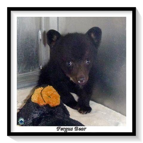 oso bebe huerfano 8