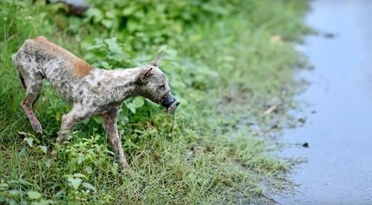 perro Lucky escapa hocico atado necrosis 1