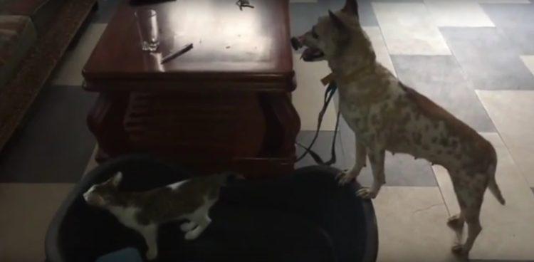perro Lucky escapa hocico atado necrosis 12