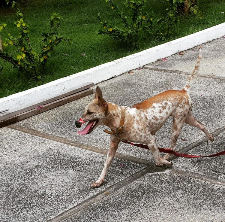 perro Lucky escapa hocico atado necrosis 15