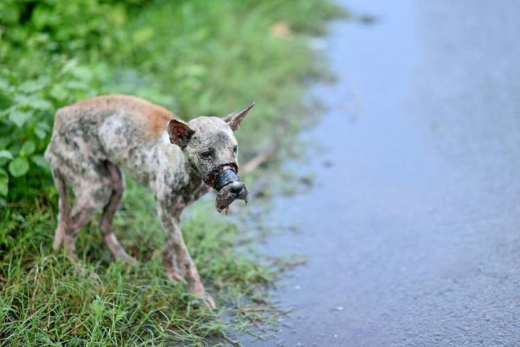 perro Lucky escapa hocico atado necrosis 2