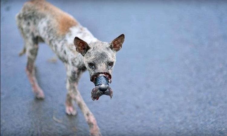 perro Lucky escapa hocico atado necrosis 3