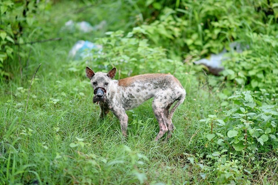 perro Lucky escapa hocico atado necrosis 4