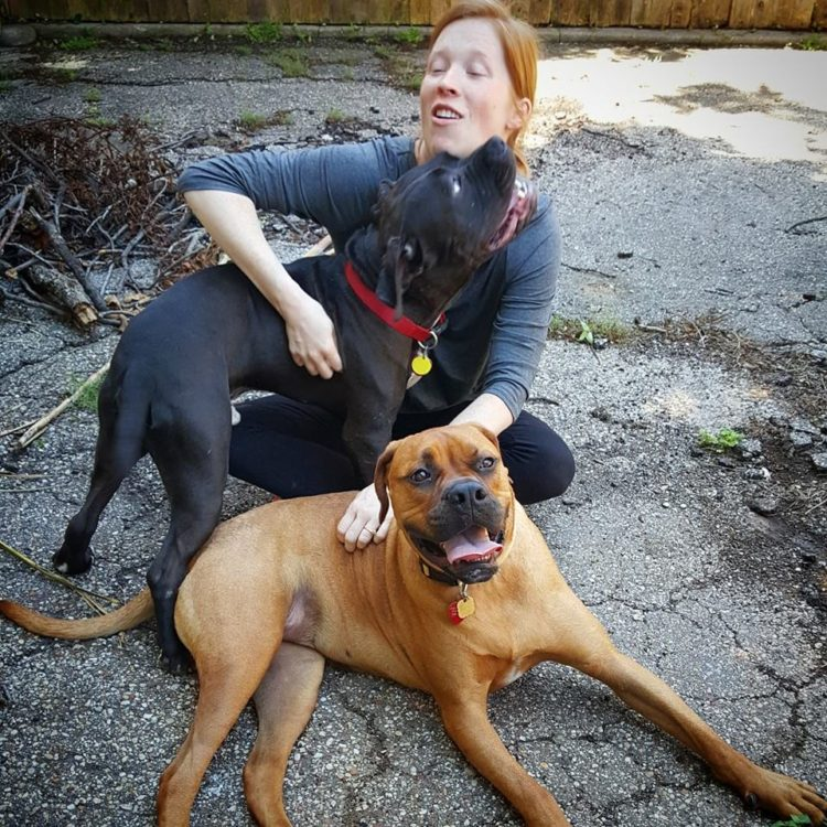 perro Muggless rescatado de refugio por Judy 11