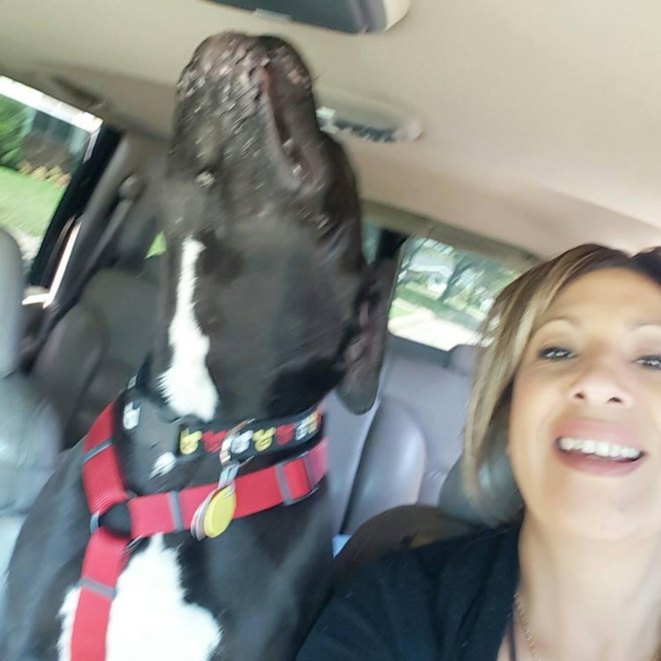 perro Muggless rescatado de refugio por Judy 5