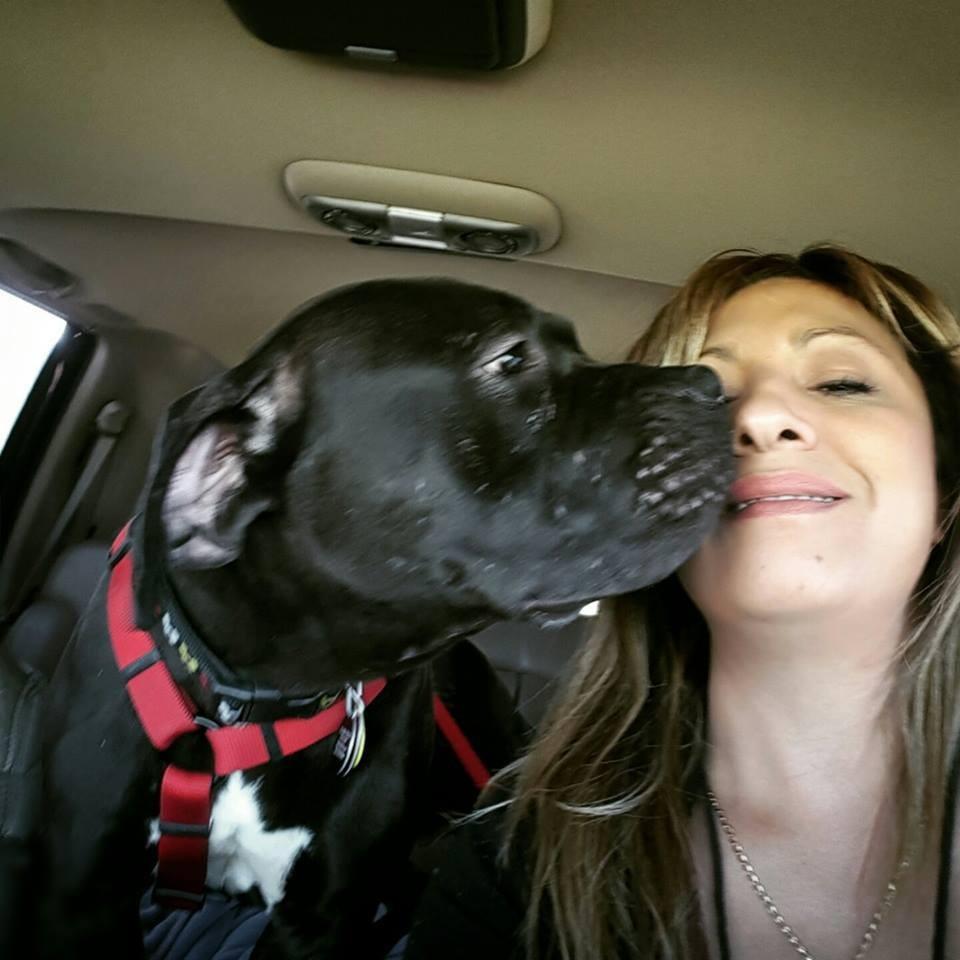 perro Muggless rescatado de refugio por Judy 6