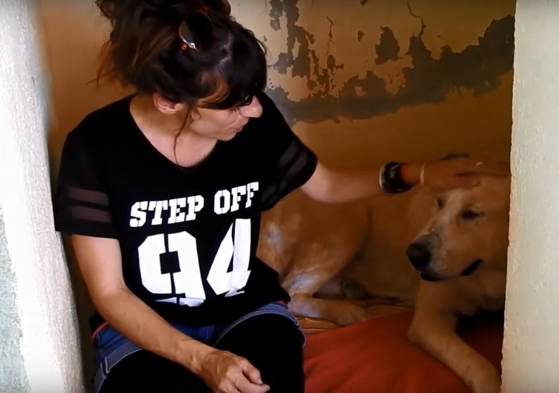 perro abandonado enfermo sin oreja Grecia 14
