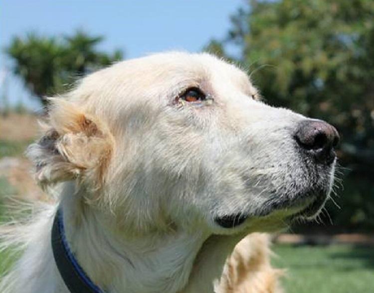 perro abandonado enfermo sin oreja Grecia 16