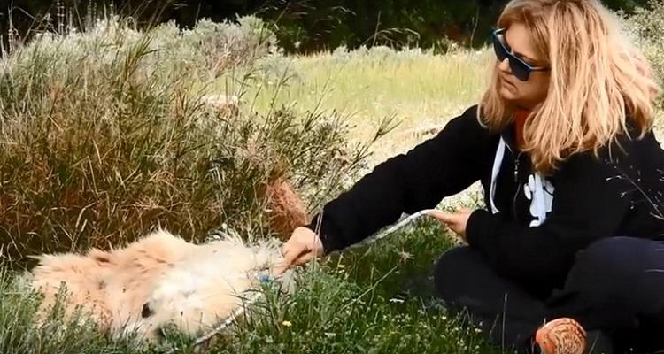 perro abandonado enfermo sin oreja Grecia 8