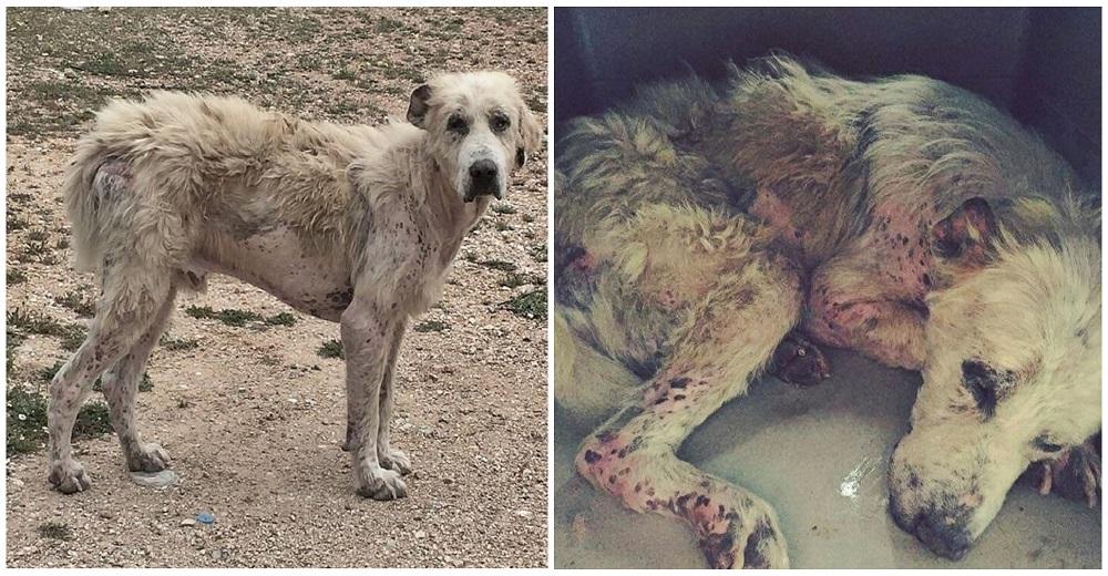 perro abandonado enfermo sin oreja Grecia portada 1