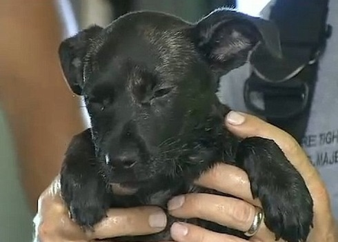 perro-atrapado-carro5