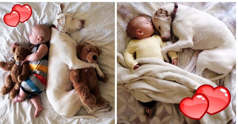 perro-bebe-ternura-siesta