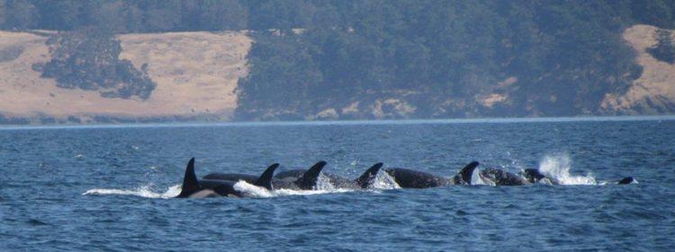 refugio-orcas-cautiverio2