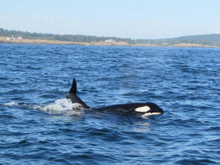 refugio-orcas-cautiverio3