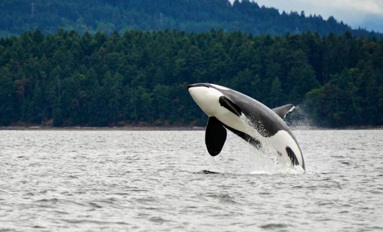 refugio-orcas-cautiverio5