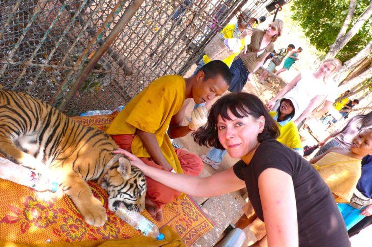 templo de tigres alfombra