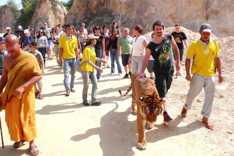 templo de tigres caminata