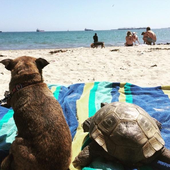 10 mejores amigos tortuga de 50 años y perrita adoptados por actriz van a todos lados