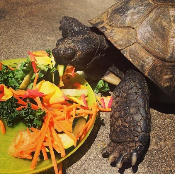 16 mejores amigos tortuga de 50 años y perrita adoptados por actriz van a todos lados