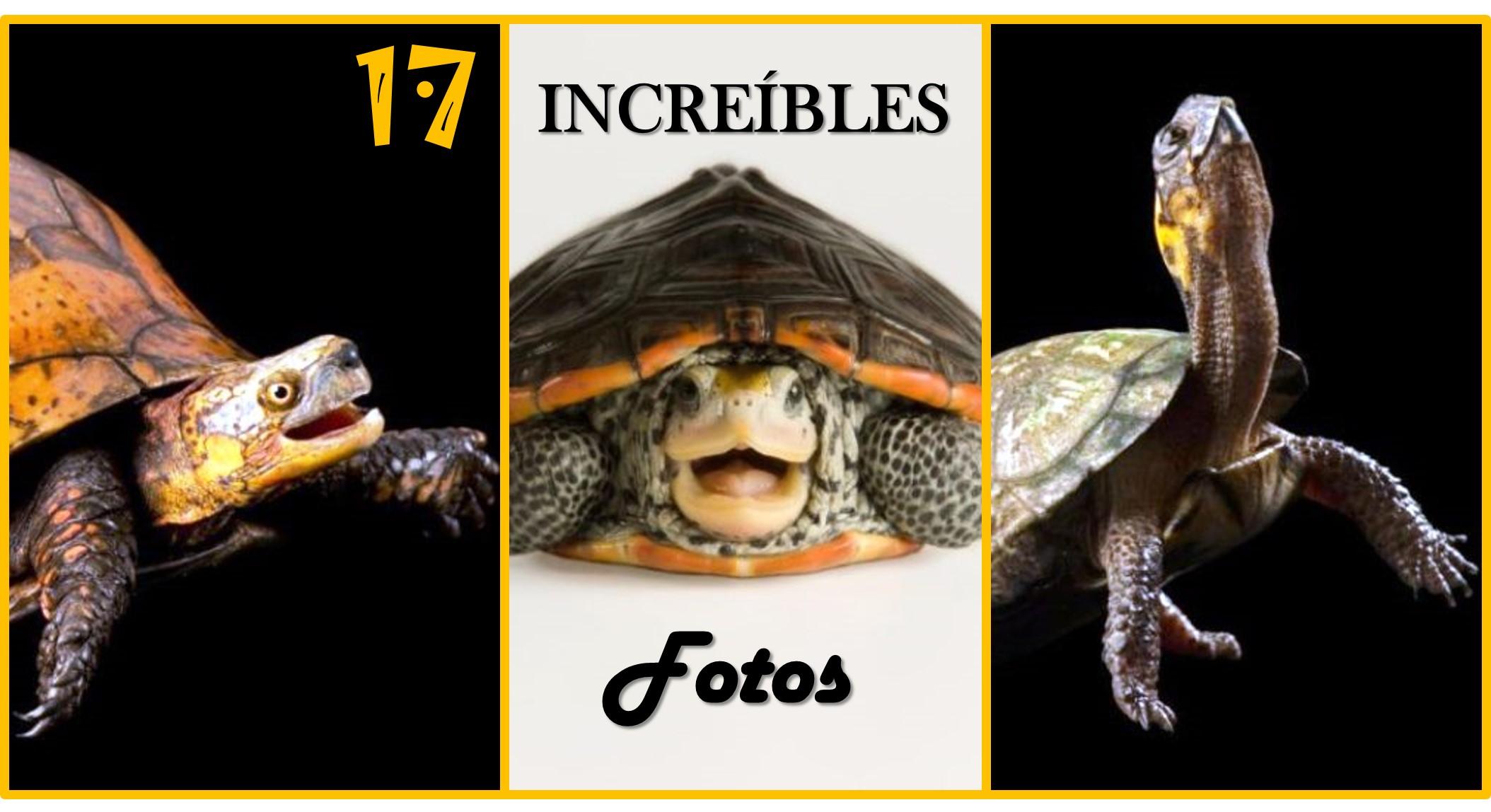 17-asombrosas-fotos-de-tortugas-en-peligro-