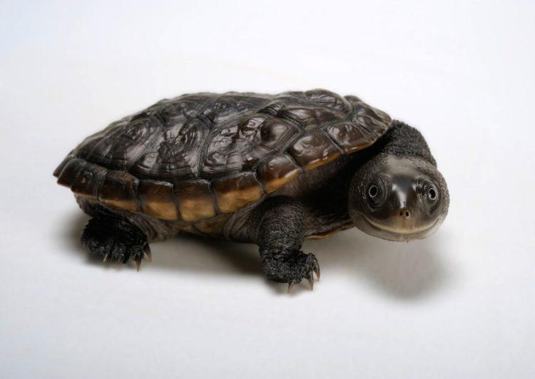 17 magníficas fotografias de tortugas dia mundial 23 de mayo 01