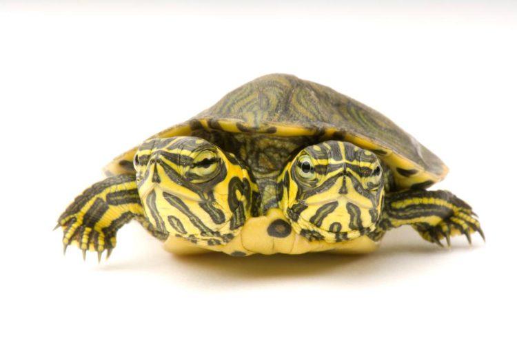 17 magníficas fotografias de tortugas dia mundial 23 de mayo 02