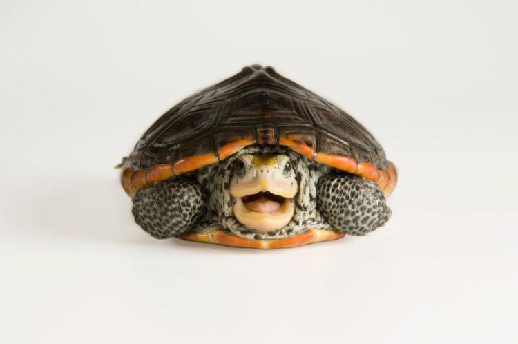 17 magníficas fotografias de tortugas dia mundial 23 de mayo 04