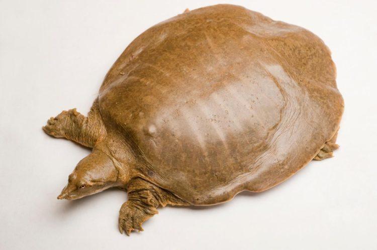17 magníficas fotografias de tortugas dia mundial 23 de mayo 06