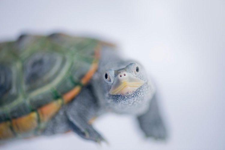 17 magníficas fotografias de tortugas dia mundial 23 de mayo 07