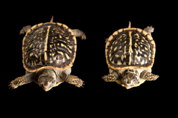 17 magníficas fotografias de tortugas dia mundial 23 de mayo 08
