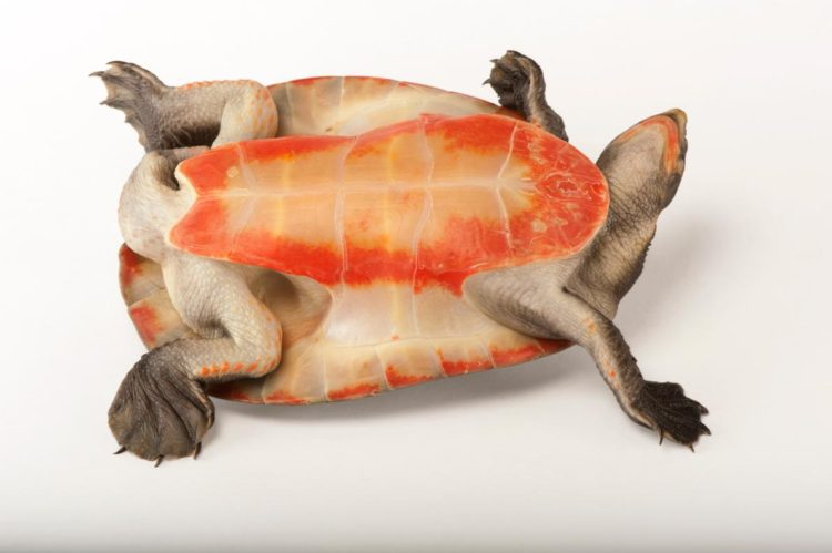 17 magníficas fotografias de tortugas dia mundial 23 de mayo 09