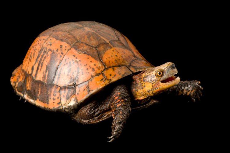 17 magníficas fotografias de tortugas dia mundial 23 de mayo 10