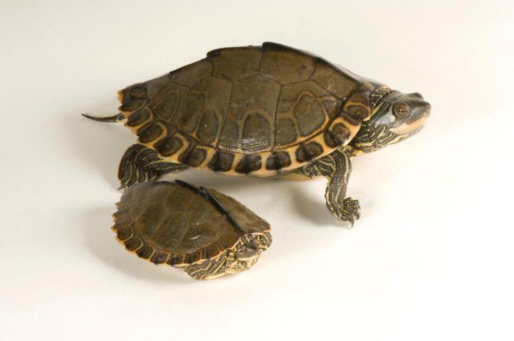 17 magníficas fotografias de tortugas dia mundial 23 de mayo 11