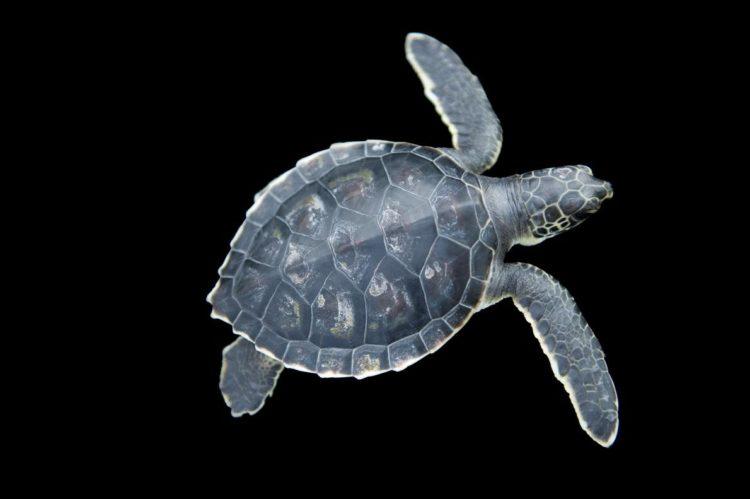 17 magníficas fotografias de tortugas dia mundial 23 de mayo 12