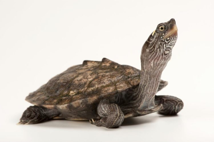 17 magníficas fotografias de tortugas dia mundial 23 de mayo 13