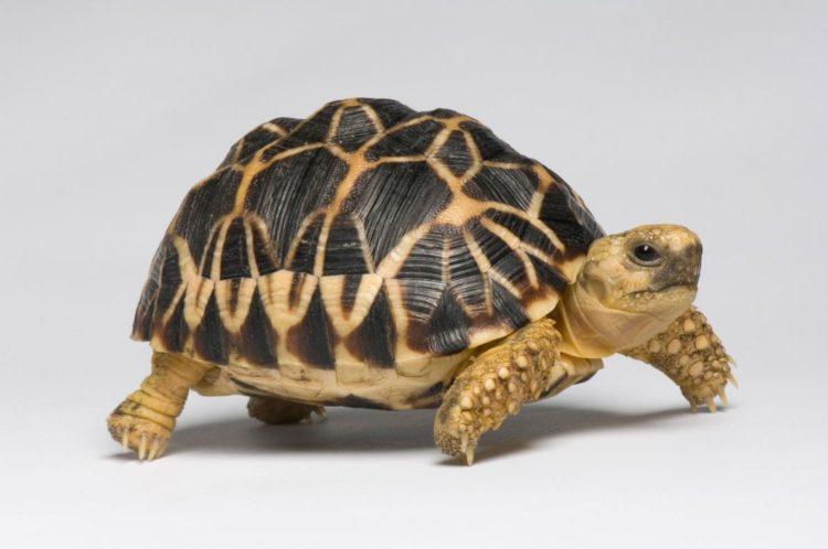 17 magníficas fotografias de tortugas dia mundial 23 de mayo 14