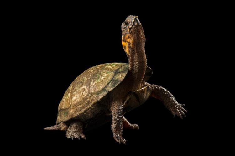 17 magníficas fotografias de tortugas dia mundial 23 de mayo 15
