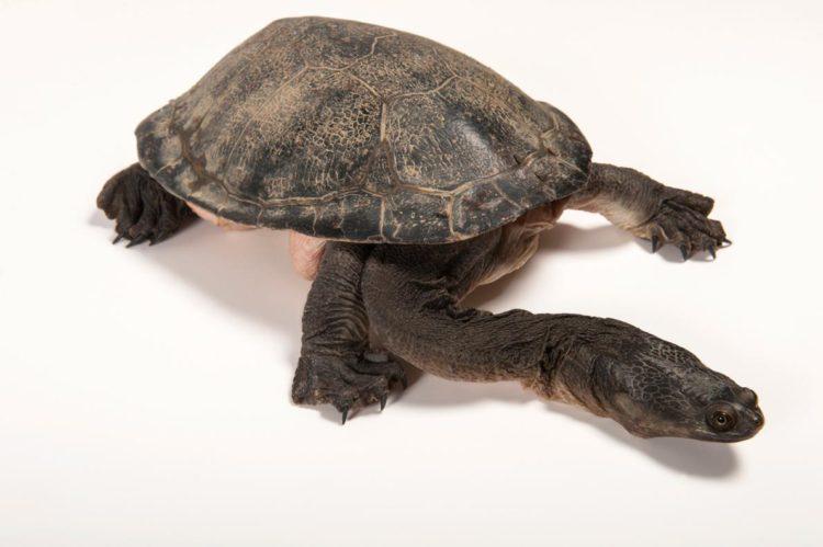 17 magníficas fotografias de tortugas dia mundial 23 de mayo 16