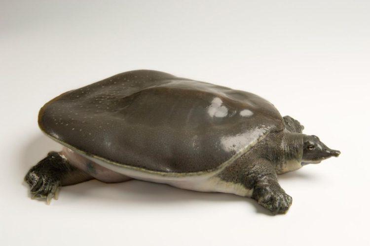 17 magníficas fotografias de tortugas dia mundial 23 de mayo 17