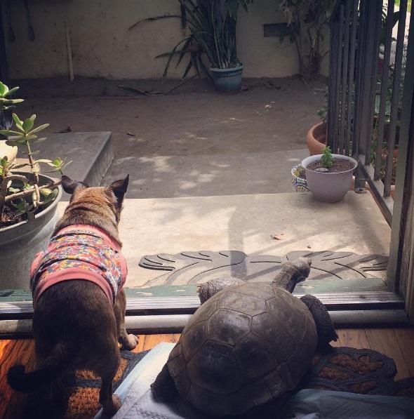 2 mejores amigos tortuga de 50 años y perrita adoptados por actriz van a todos lados