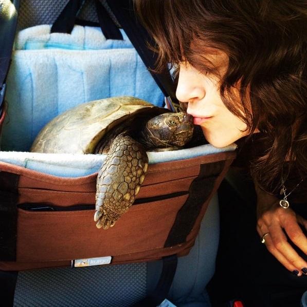 20 mejores amigos tortuga de 50 años y perrita adoptados por actriz van a todos lados